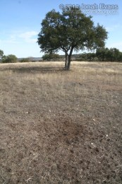 Blackbuck Latrine