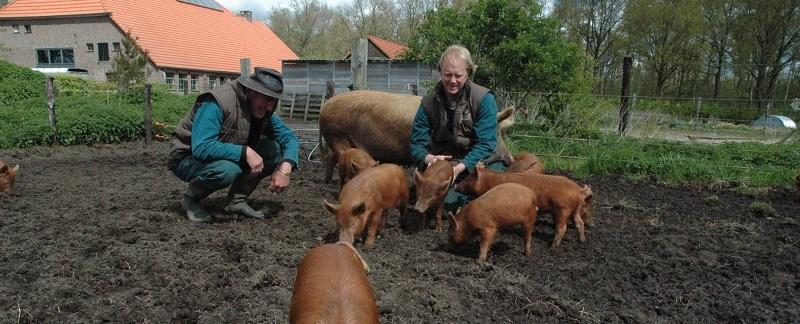 woeste-varkens-pagina