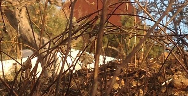 la-piramide-38°-parallelo-tra-gli-alberi-bruciati.jpg.jpg.jpeg