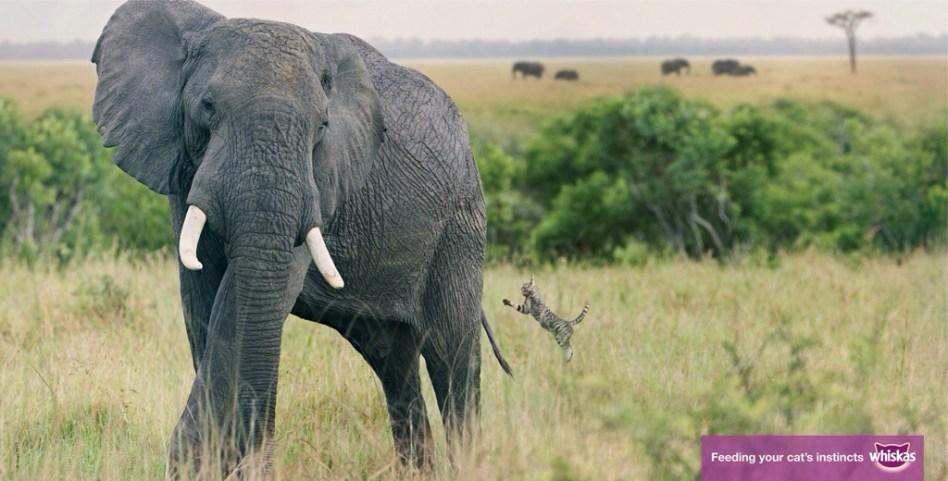象に挑むネコ