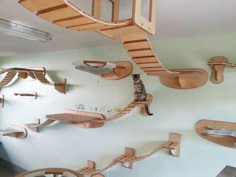 Cat furniture11