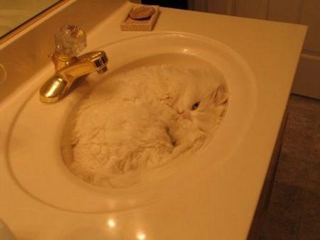 【猫画像】ふにゃっと入る!液体ねこ 15選