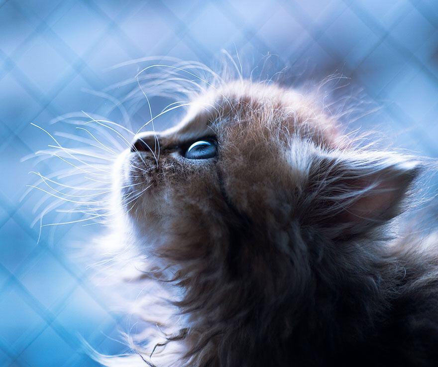 【猫画像】猫の目ヂカラ