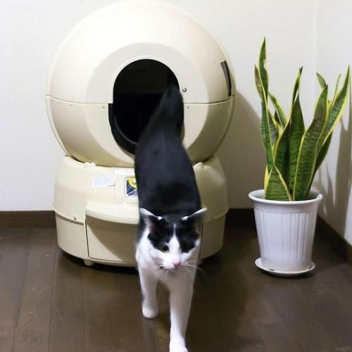 【猫グッズ】話題の全自動の猫トイレ「キャットロボット」!気になるメリット・デメリットまとめ!