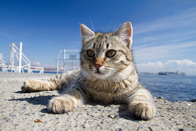 【猫ネタ】猫好きなら行ってみたい!猫シティ「イスタンブール(トルコ)」