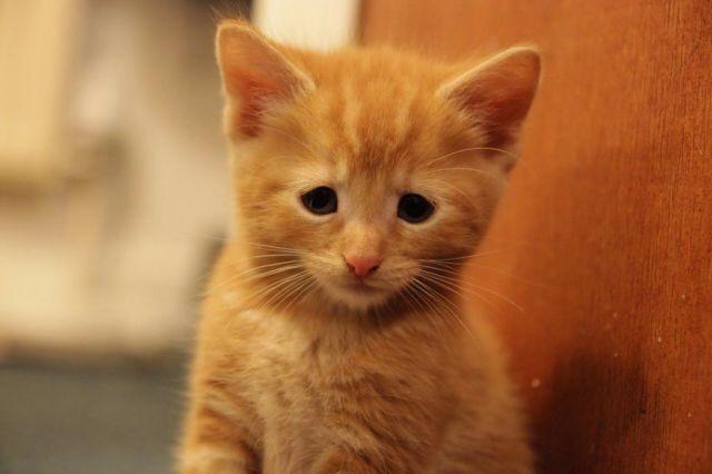 【猫画像】ちょっと困り顔