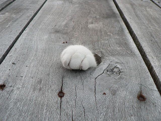 【猫画像】何もない・・・