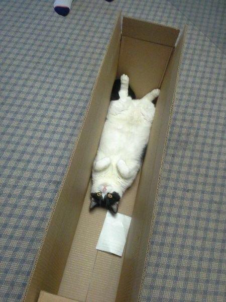 【猫画像】発送待ち
