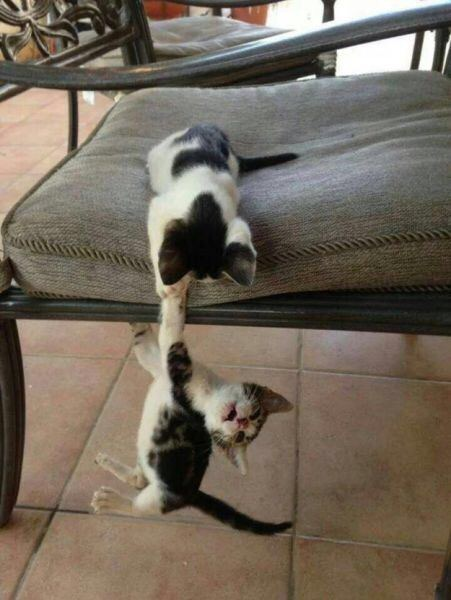 【猫画像】ファイト一発ごっこ