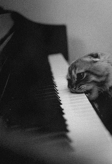 【猫画像】間違えたピアノの使い方