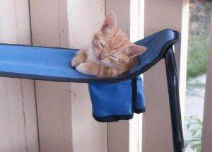 【猫画像】猫ホルダー