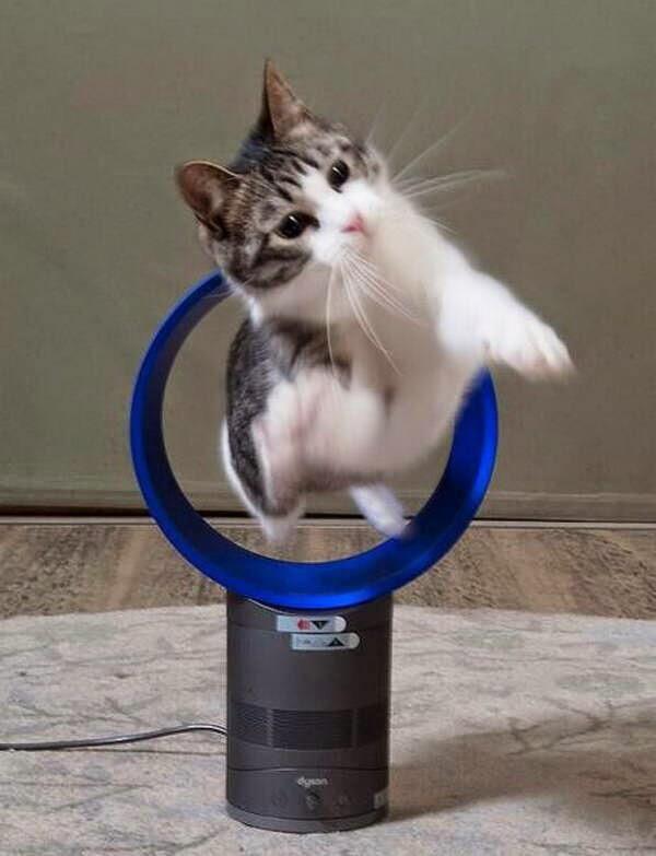 【猫画像】新しいダイソンの使い方