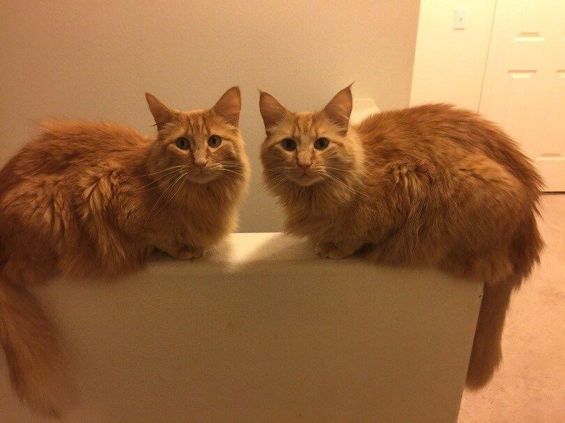 【猫画像】シンメトリー