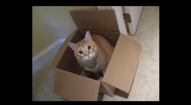 【猫科ネタ】ライオンやトラは??大型の猫科動物は箱に入りたがるのか・・・!?