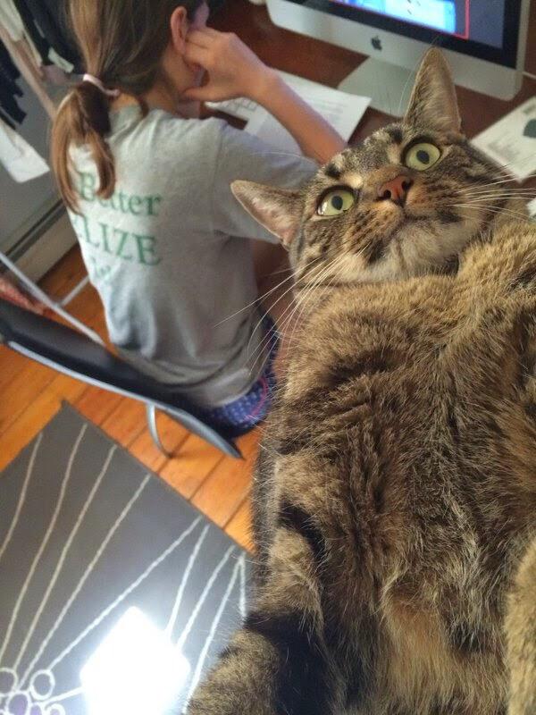 【猫画像】がんばって自撮り