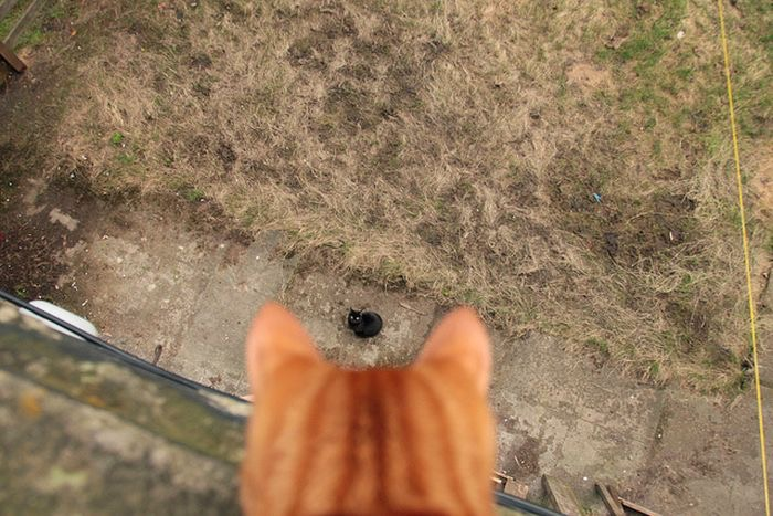 【猫画像】おーい