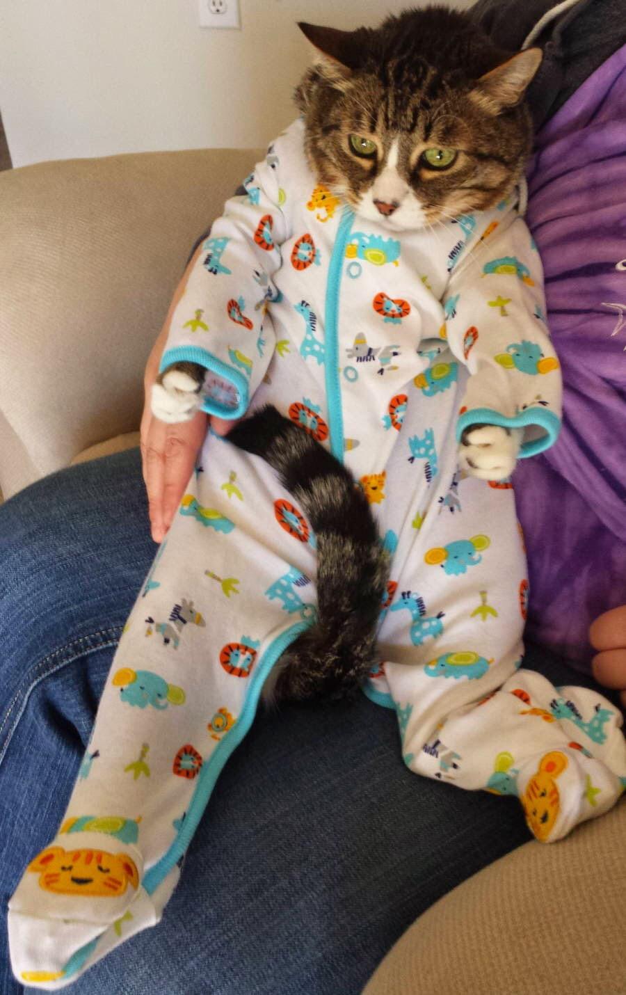 【猫画像】パジャマ着たけど・・・