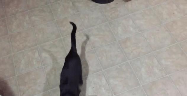 【猫動画】すごく簡単!?すばやい猫をたった20秒で捕まえる方法