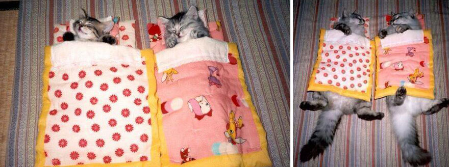 【猫画像】こんなに変わった!?猫のビフォーアフターを比較すると・・・!?