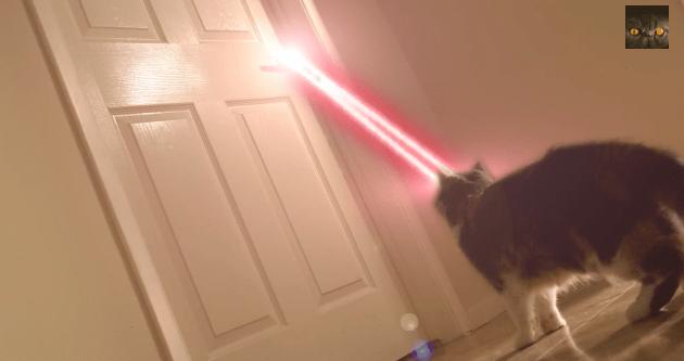 【猫動画】猫がレーザーだって!?ハイクオリティ過ぎるSF猫動画!