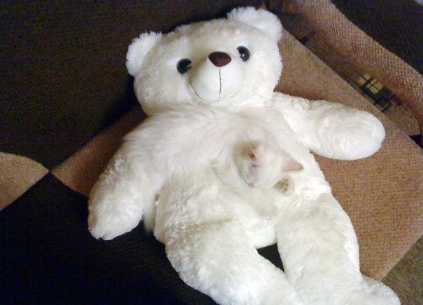 【猫画像】え!?溶け込みすぎやろ!背景と区別できない猫画像 13選