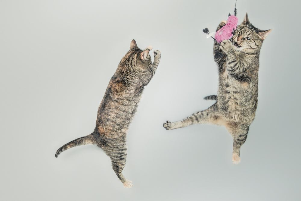 【猫ネタ】TWITTERで中毒者続出!?「#猫が読んでそうなハウツー本」大喜利ネタ 15選