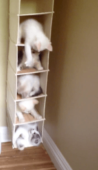【猫動画】自由すぎWW ハンガー収納で戯れる子猫がかわいすぎる!!