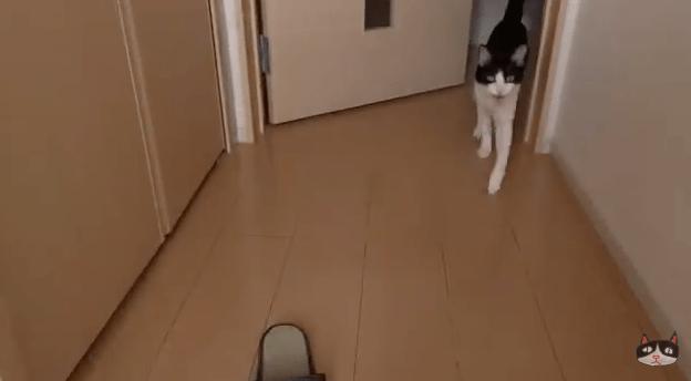 【猫動画】玄関開けたら0秒で猫!?猫の予想外のお出迎えは・・・