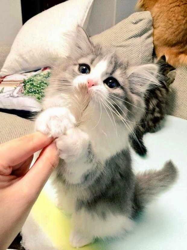 【猫画像】よろしくお願いね