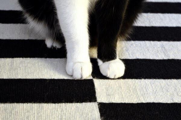 【猫画像】白い足と黒い足