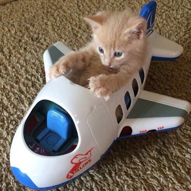 【猫画像】パイロット気分