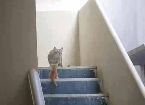 【猫動画】母は強し!?まるで忍者な母猫の身体能力がスゴイ!!!