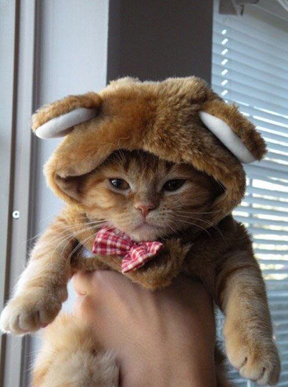 【猫画像】毛皮に毛皮?