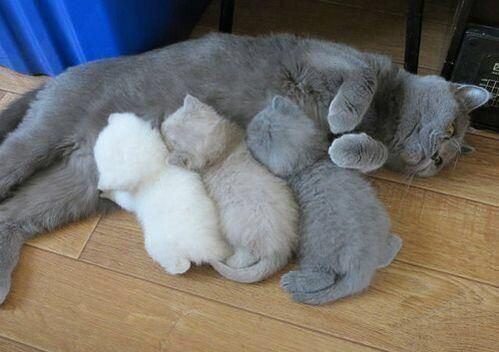 【猫画像】子猫グラデーション