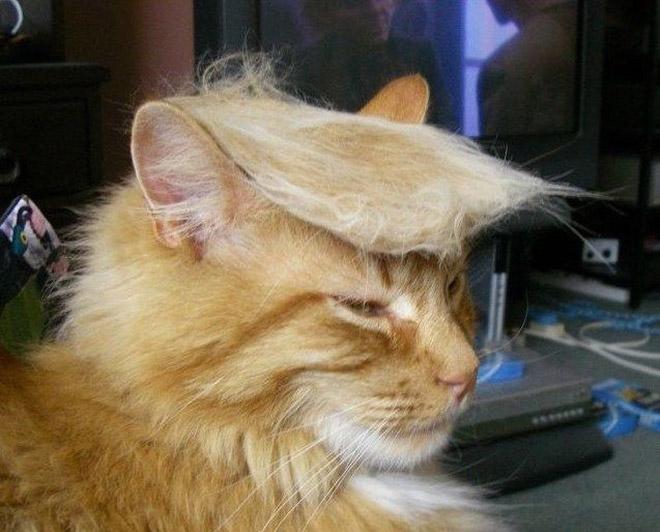 【猫ネタ】ジワジワくる猫のヅラ!?手軽にできる飼い猫おもしろ画像とは・・・