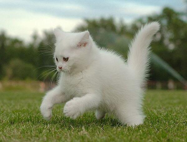 【猫画像】タックルする瞬間