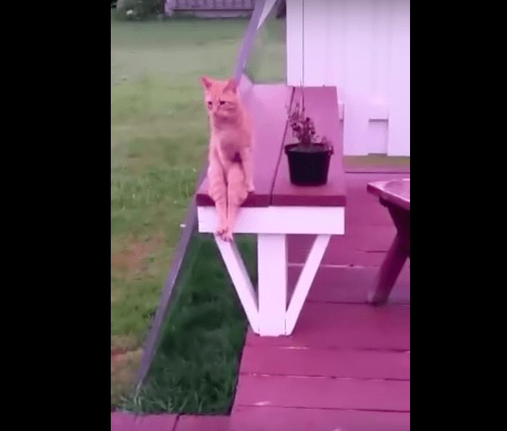 【猫動画】再生数50万超え!!ネットで話題のセクシー過ぎる猫の座り方とは・・・!?