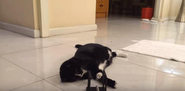 【猫動画】物理が分かってる!?賢い猫のスマートな遊び方とは・・・!?