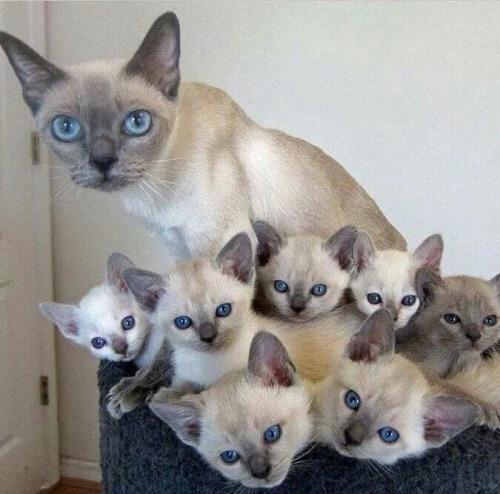 【猫画像】目が・・・