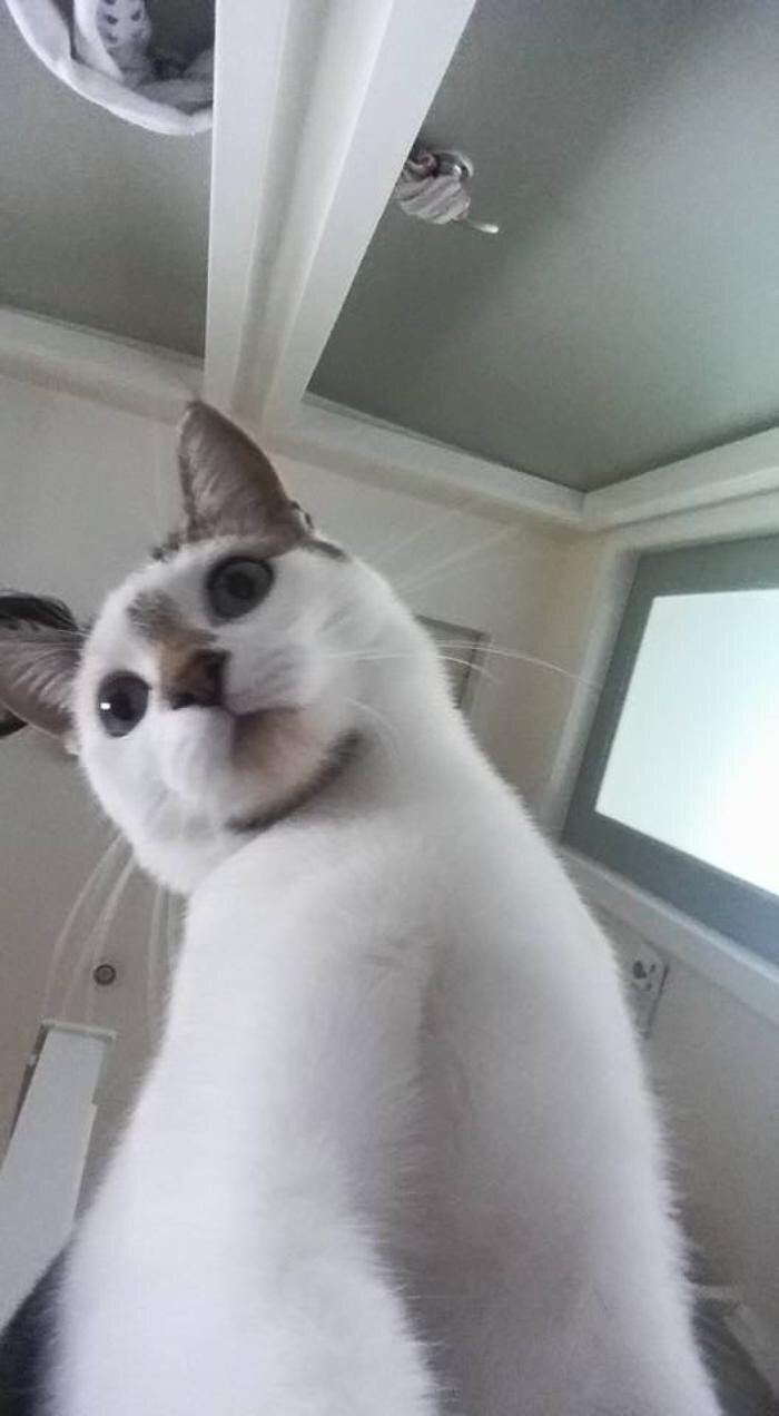 【猫画像】おはようございます