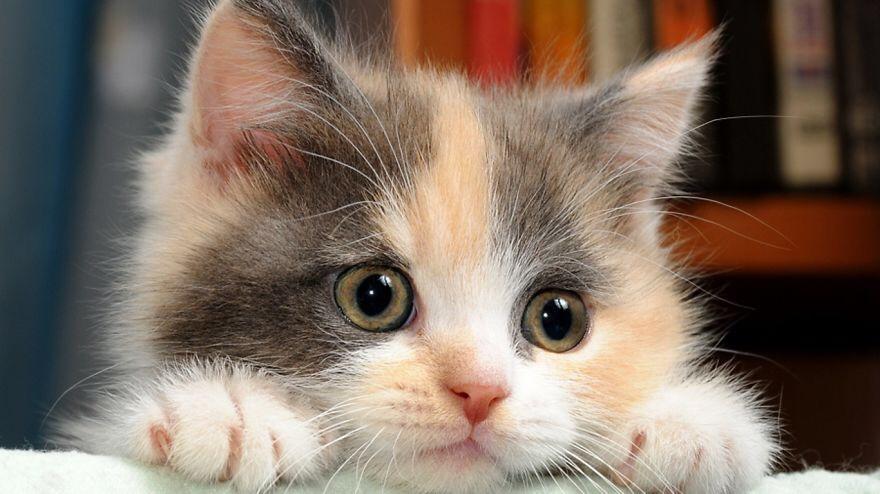 【猫画像】目がキラキラ