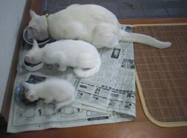 【猫画像】3世代?