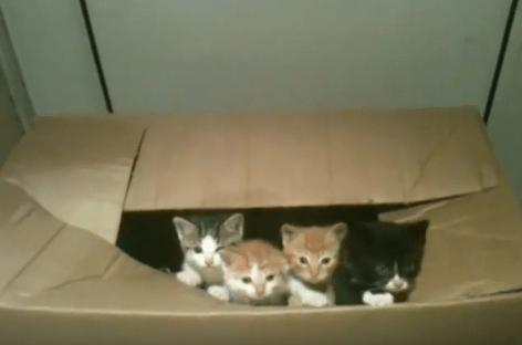 【猫動画】可愛すぎて涙が・・・!?がんばり屋さんな小さい子猫の動きが・・・!?