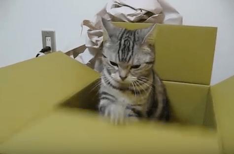 【猫動画】ついつい見てしまう中毒性!?ジワジワくる猫のペコペコとは・・・!?