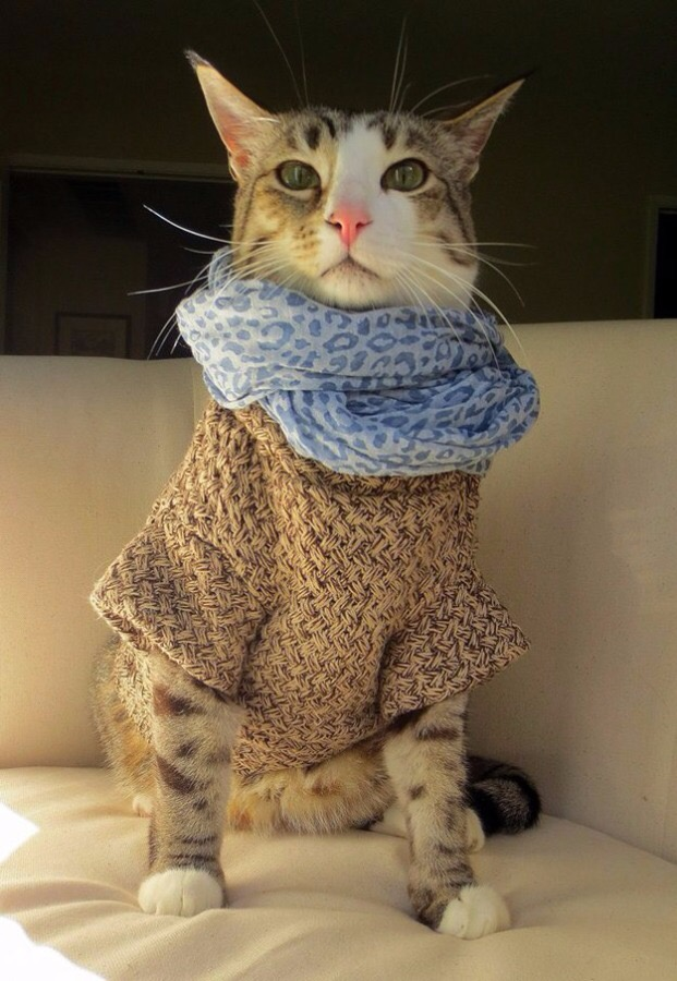 【猫画像】オシャレさん