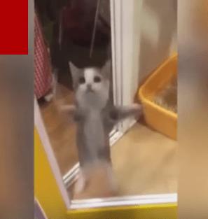 【猫動画】これは可愛すぎるわ!!飼い主さんが帰ってきた時に可愛すぎる猫の反応とは・・・!?