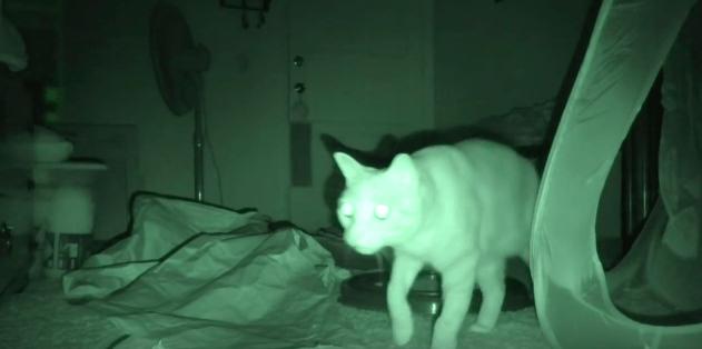 【猫動画】名作ホラーの猫版!?カメラがとらえた深夜の猫の行動とは・・・!? – PARANORMAL CATIVITY