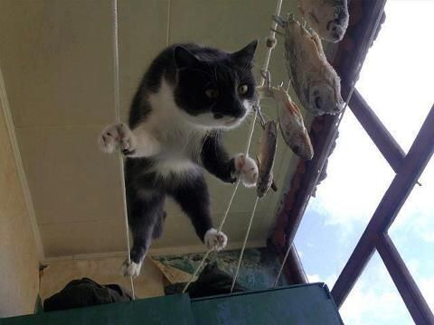 【猫画像】綱渡り!!