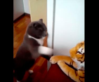 【猫動画】猫パンチ連打連打!!トラのぬいぐるみを見た猫の驚きの反応とは・・・!?