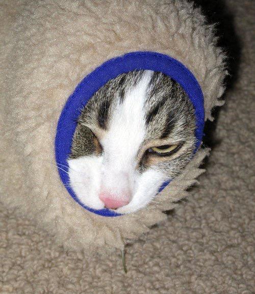 【猫画像】寒い!